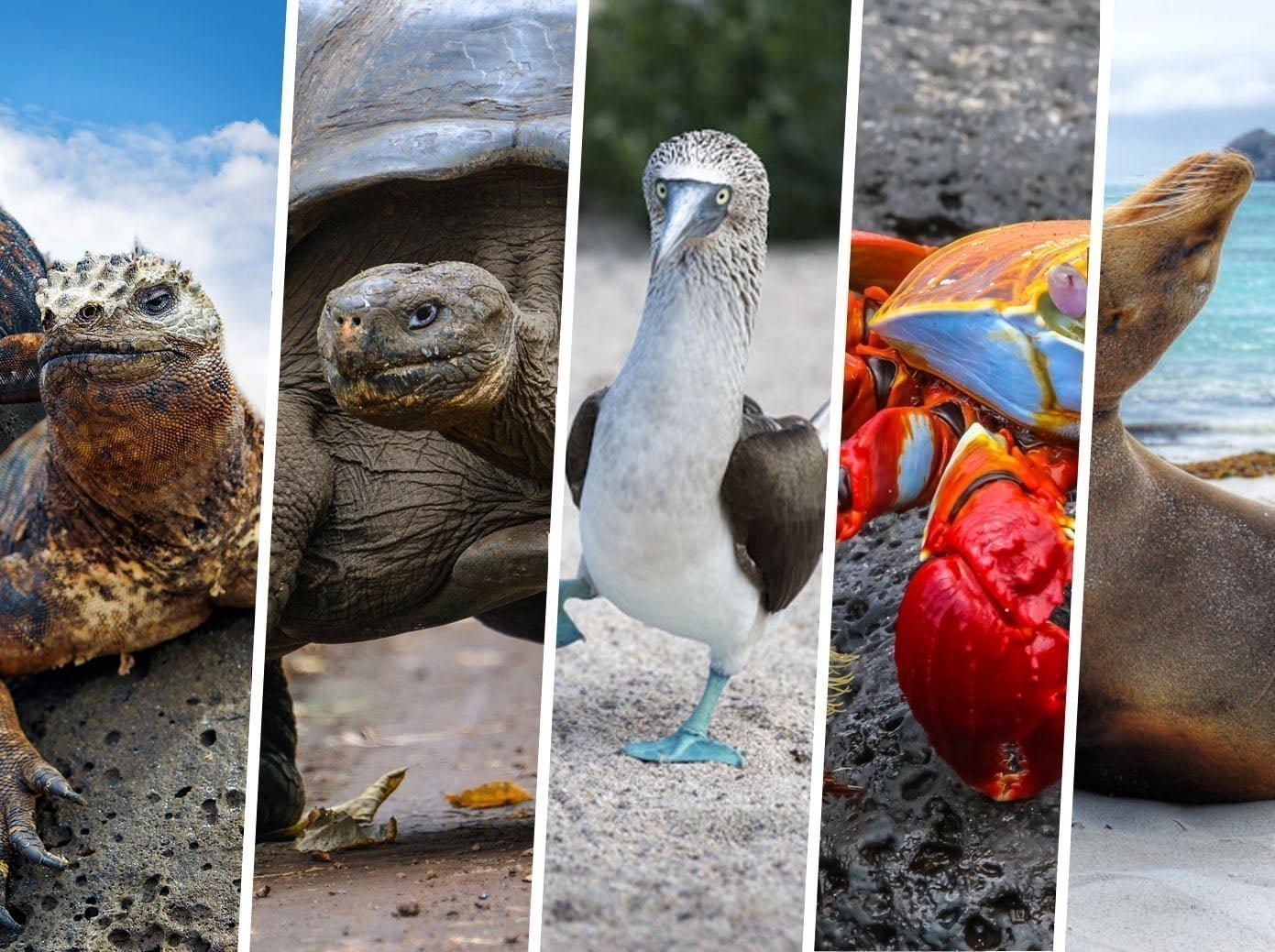 Les Animaux des îles Galapagos