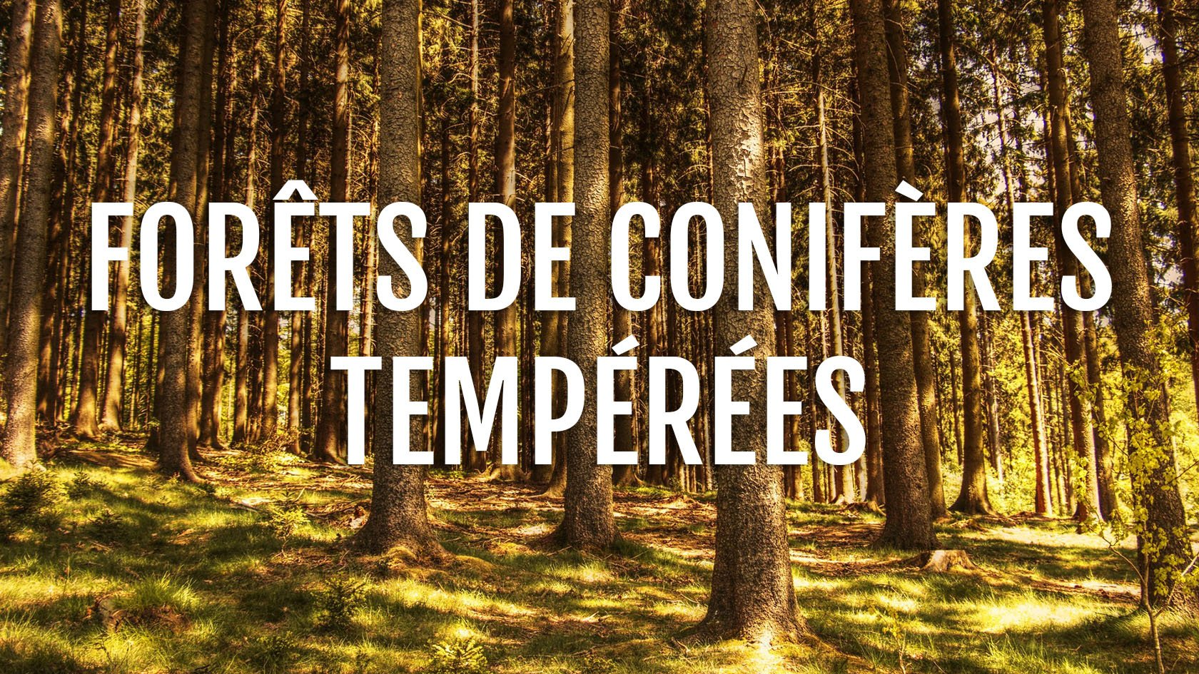 https://www.monde-animal.fr/habitat/forets-de-coniferes-temperees/
